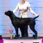 Best Puppy Female - 02 - so
